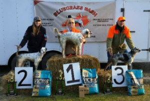 Sunday Puppy Winners: 1st Russ Leaming with Dallas, 2nd Rafe Millard with Remi and 3rd Grant Hines with Pepper